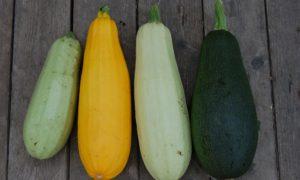 zucchini-1637435_1920